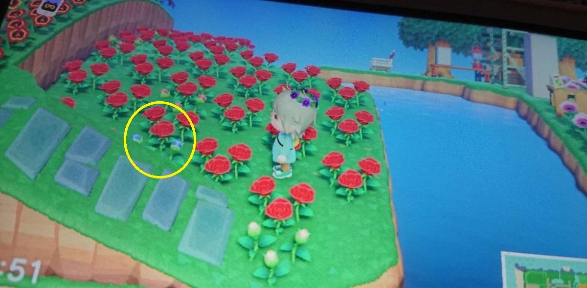 あつ森 青いバラの作り方