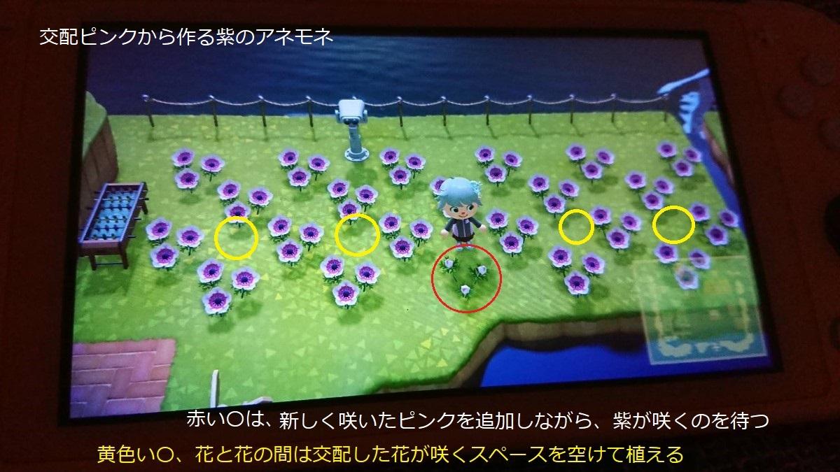 あつ森 紫のアネモネの作り方